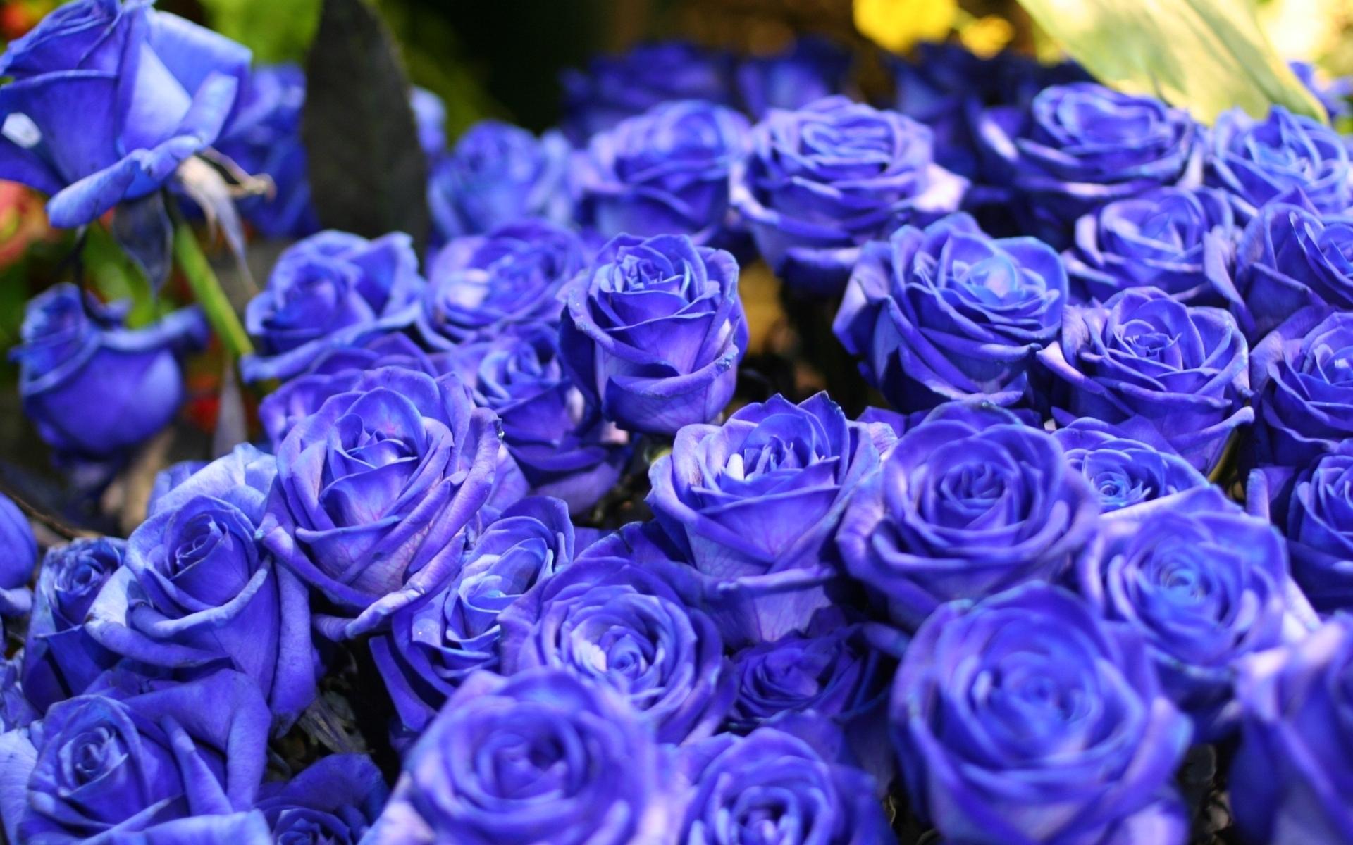 21548 télécharger le fond d'écran Plantes, Fleurs, Roses, Bouquets - économiseurs d'écran et images gratuitement