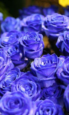 21548 baixar papel de parede Plantas, Flores, Rosas, Bouquets - protetores de tela e imagens gratuitamente