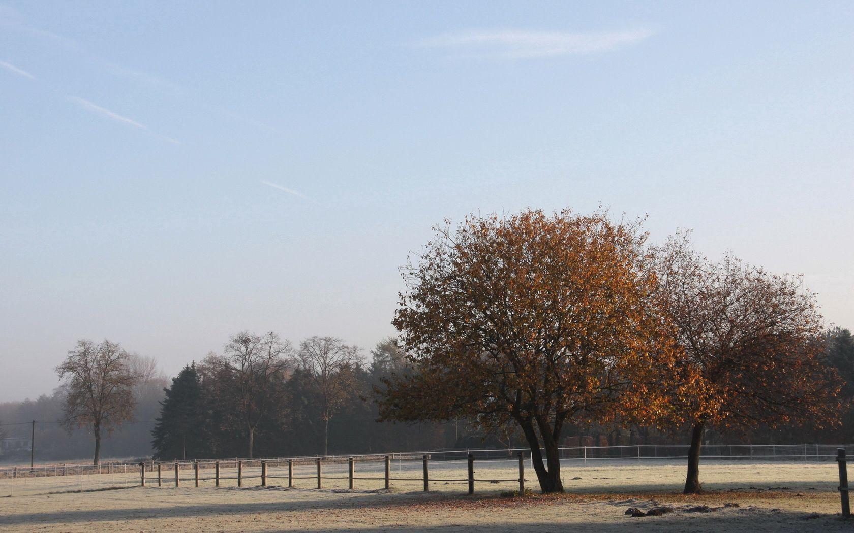 70267 скачать обои Природа, Поле, Забор, Деревья, Заморозки, Утро, Иней, Прохлада, Осень, Октябрь - заставки и картинки бесплатно