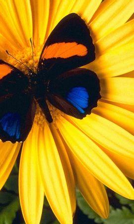 8701 Salvapantallas y fondos de pantalla Insectos en tu teléfono. Descarga imágenes de Mariposas, Flores, Insectos gratis