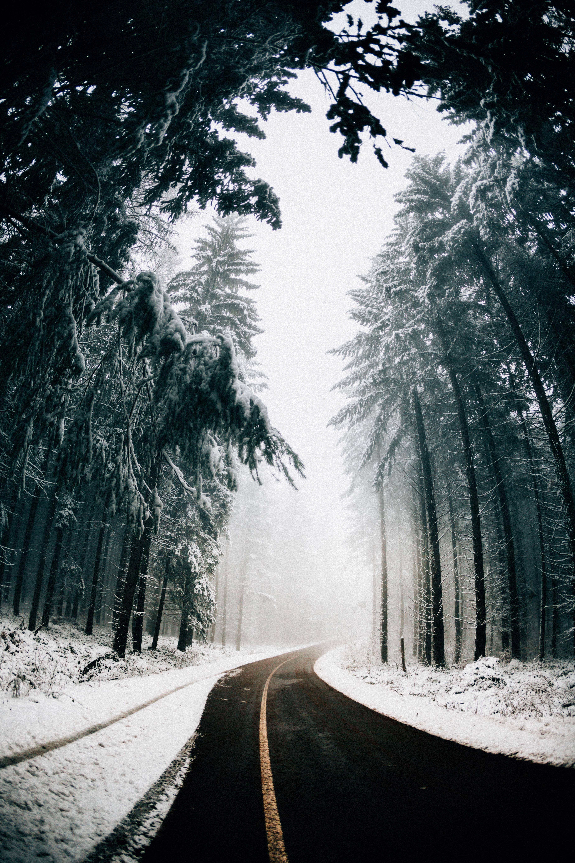 88976 скачать обои Дорога, Асфальт, Зима, Природа, Деревья, Поворот, Туман - заставки и картинки бесплатно
