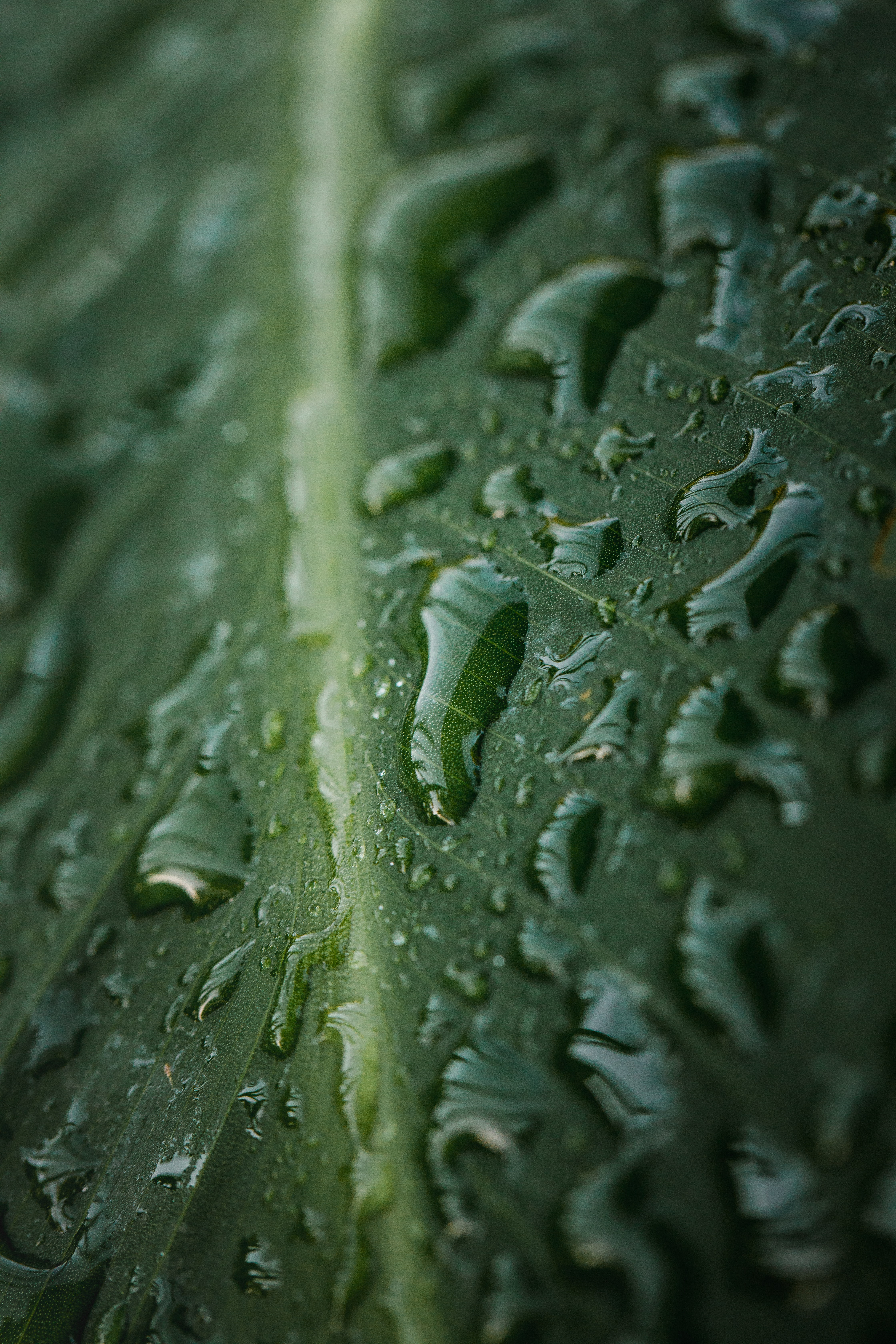 143581 download wallpaper Macro, Sheet, Leaf, Drops, Wet, Water screensavers and pictures for free