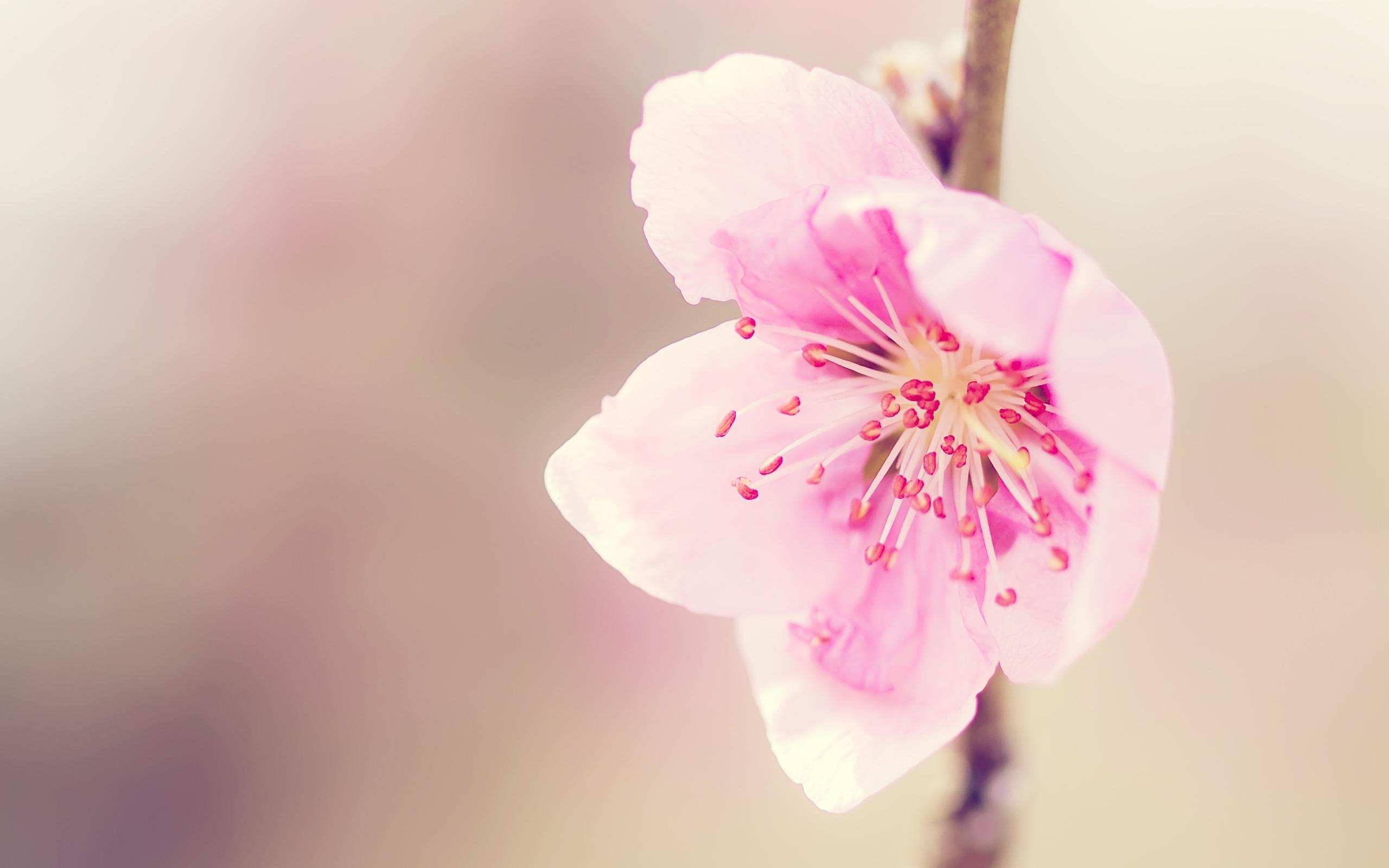 50141 fond d'écran 1125x2436 sur votre téléphone gratuitement, téléchargez des images Plantes, Fleurs 1125x2436 sur votre mobile