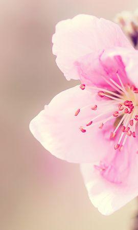 50141 скачать обои Растения, Цветы - заставки и картинки бесплатно