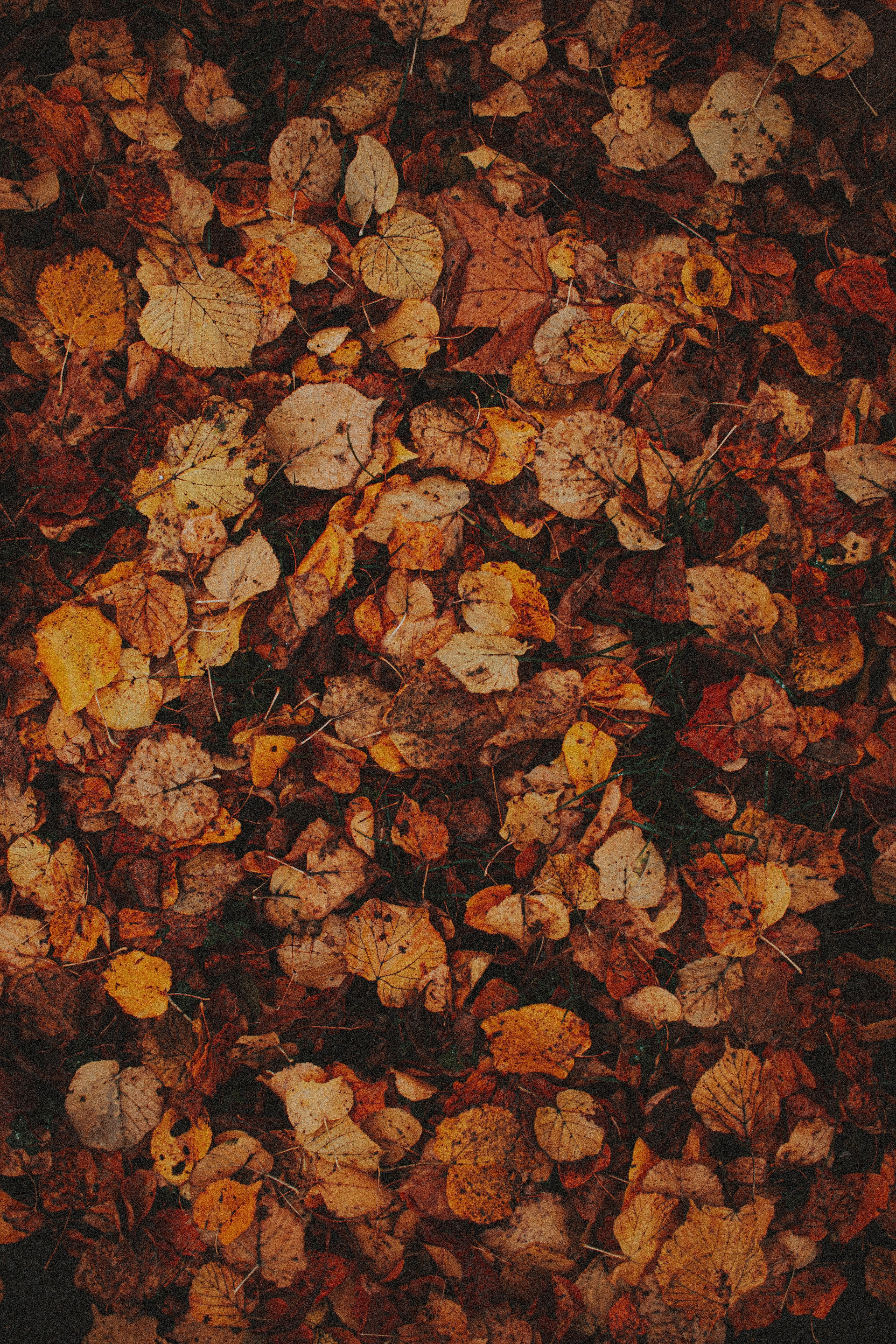 118930 download wallpaper Macro, Leaves, Grass, Autumn, Brown, Dry screensavers and pictures for free