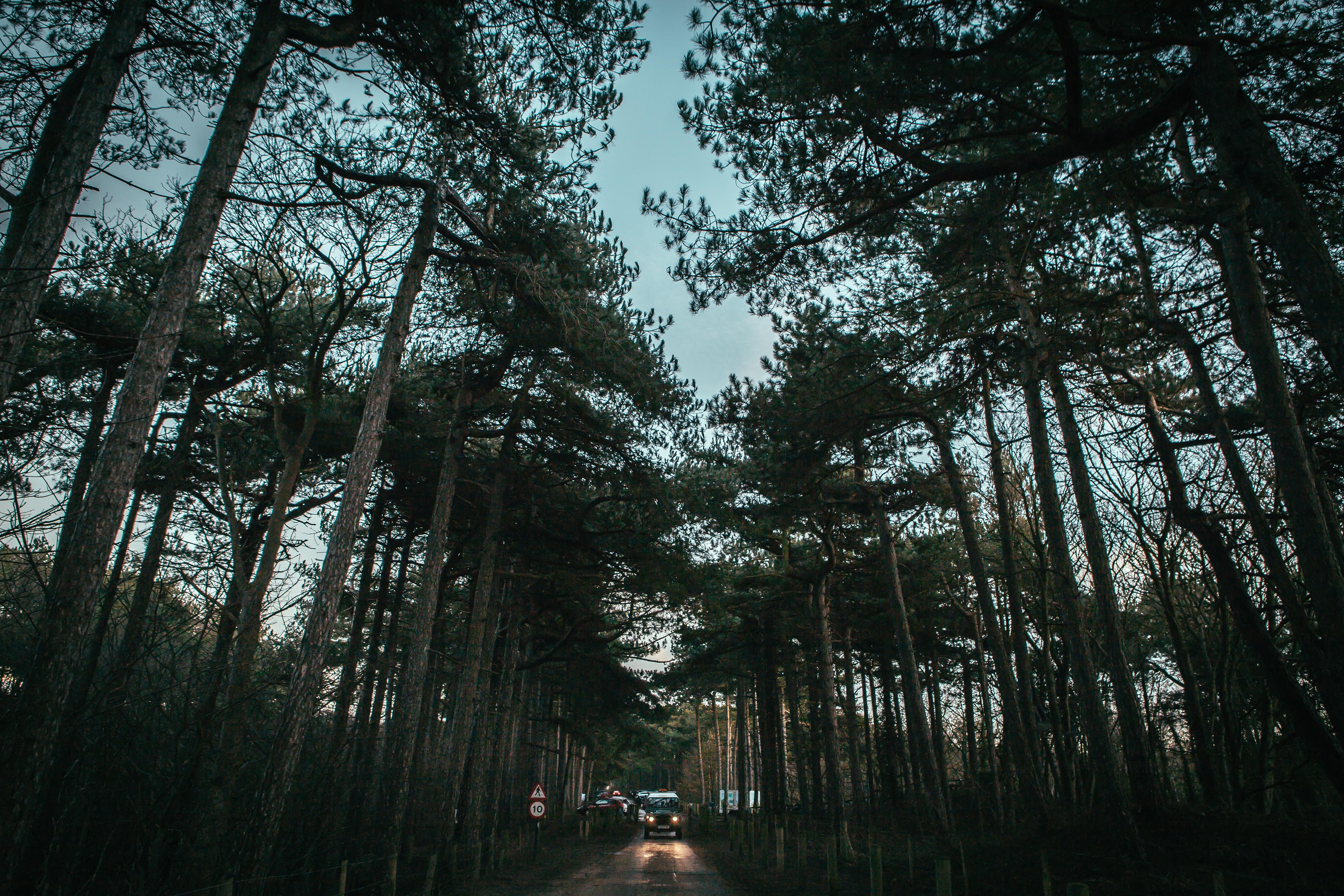 130816 скачать обои Природа, Деревья, Дорога, Небо, Машины - заставки и картинки бесплатно