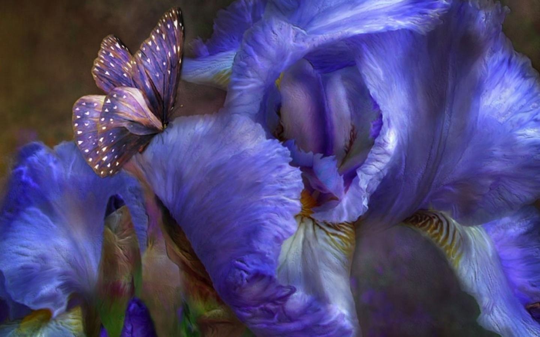 36768 скачать обои Бабочки, Рисунки, Насекомые - заставки и картинки бесплатно