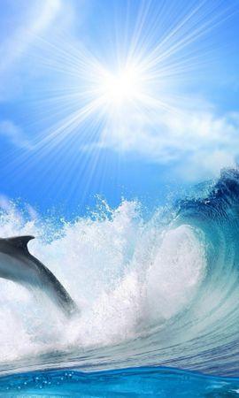 33068 baixar papel de parede Animais, Golfinhos - protetores de tela e imagens gratuitamente