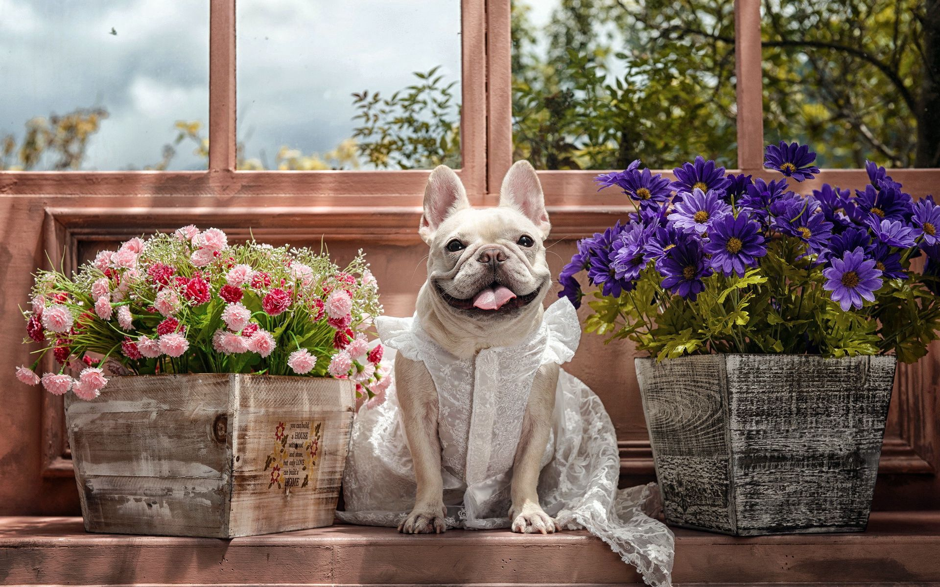 77625 download wallpaper Animals, Dog, Bulldog, Dress, Language, Tongue, Sight, Opinion, Flowers screensavers and pictures for free