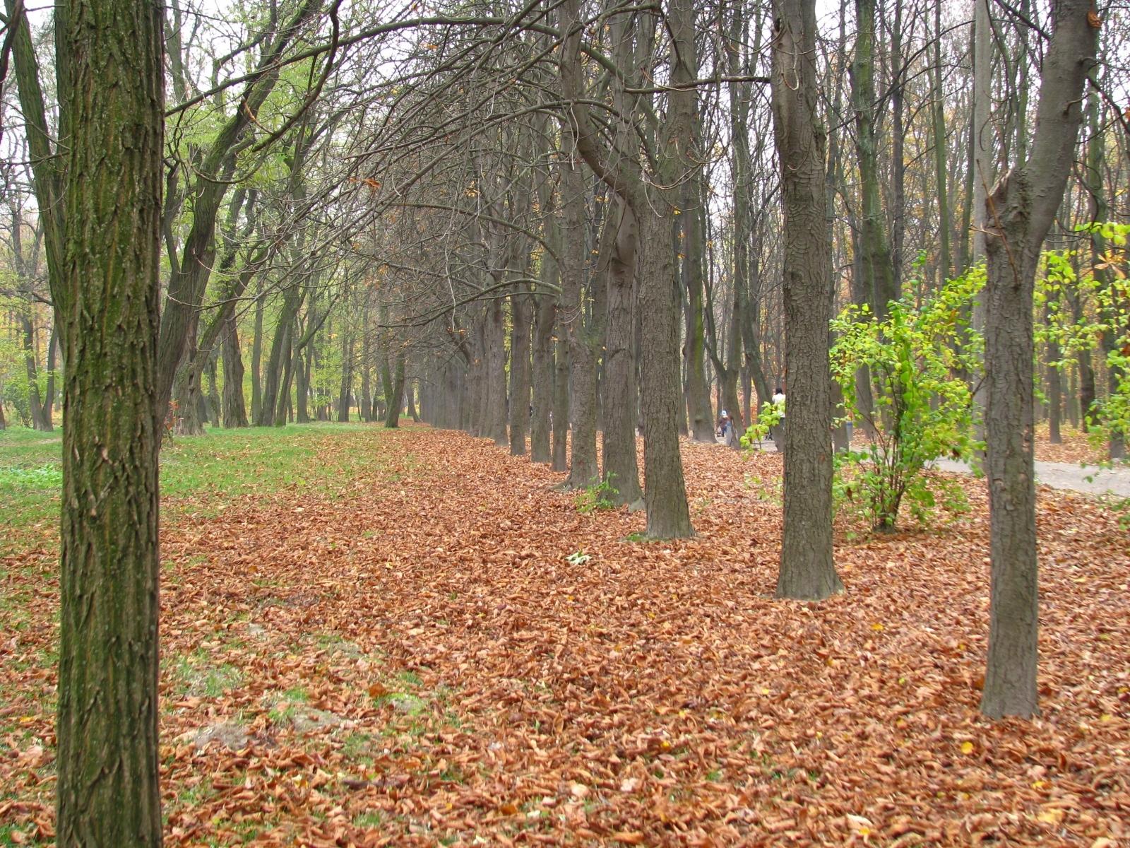 4914 скачать обои Пейзаж, Деревья, Осень - заставки и картинки бесплатно