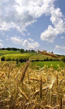 49619 скачать обои Пейзаж, Природа, Пшеница - заставки и картинки бесплатно