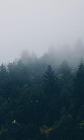 101772 Заставки и Обои Деревья на телефон. Скачать Природа, Лес, Деревья, Туман картинки бесплатно