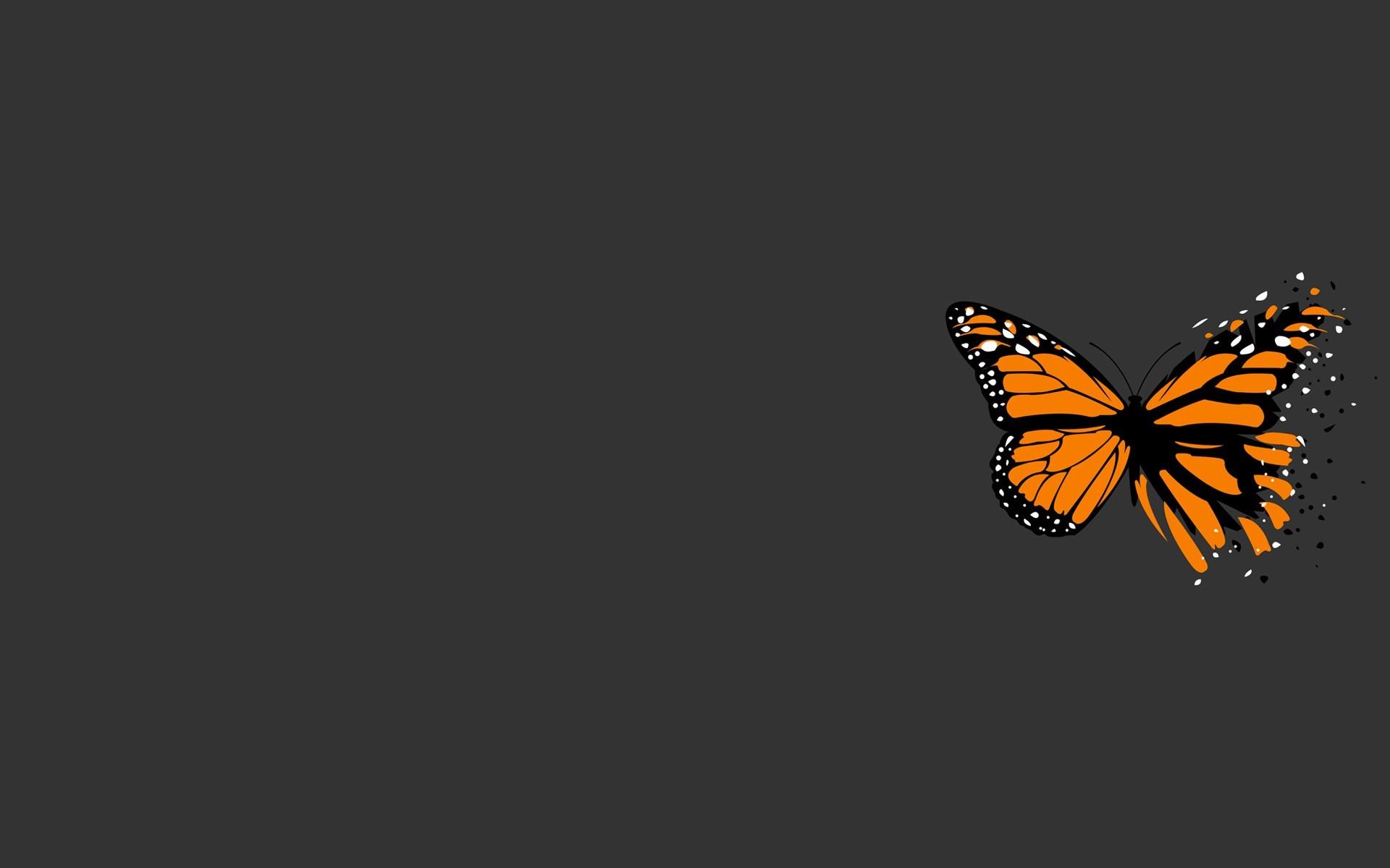 6473 скачать обои Бабочки, Насекомые - заставки и картинки бесплатно