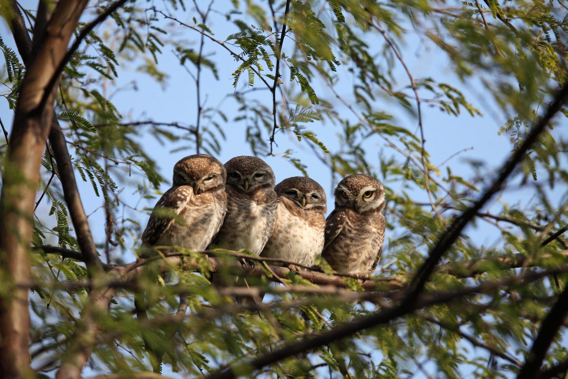 146653 Screensavers and Wallpapers Owl for phone. Download Animals, Owl, Branches, Wood, Tree pictures for free