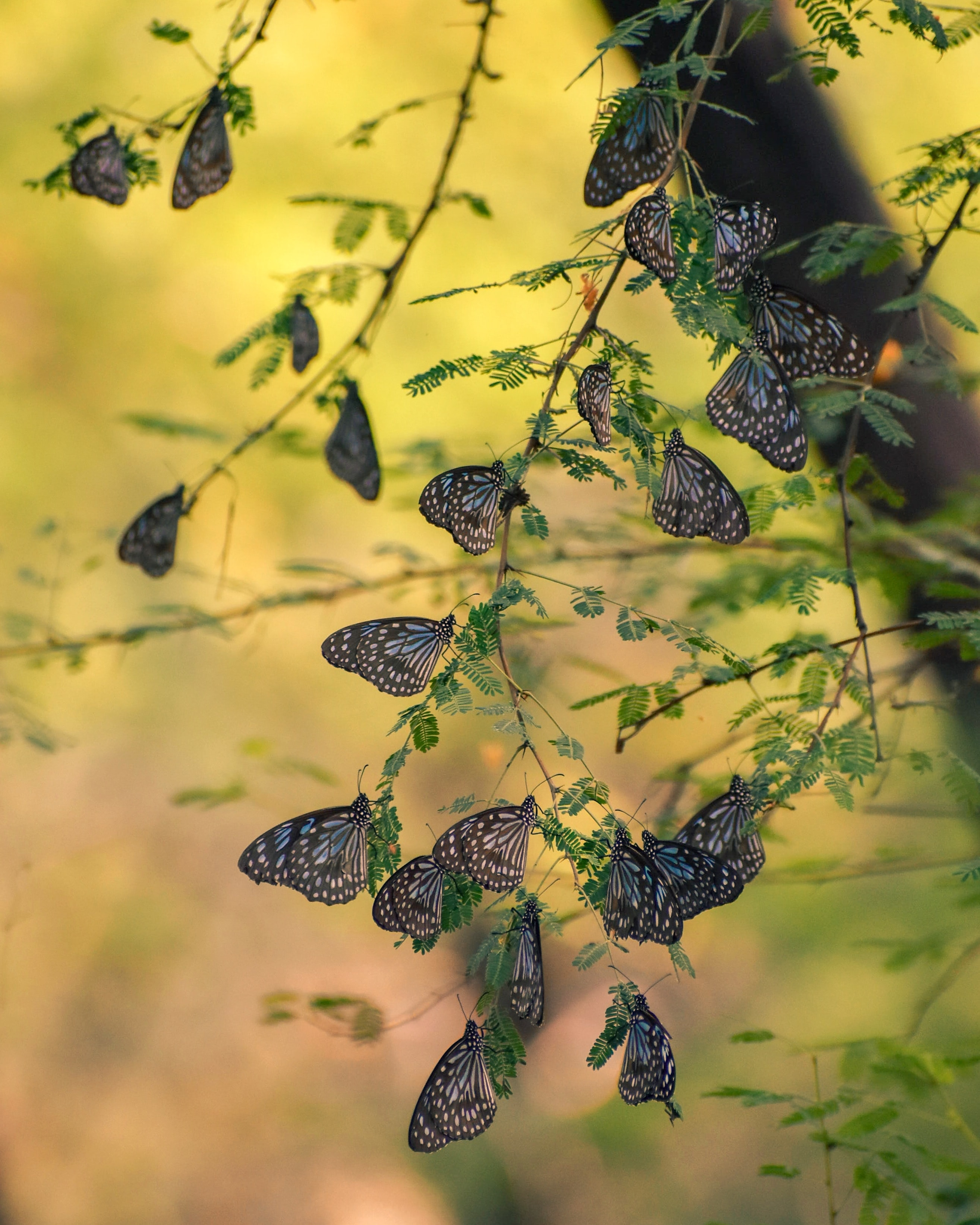 124632 download wallpaper Macro, Butterflies, Branches, Leaves, Insects screensavers and pictures for free