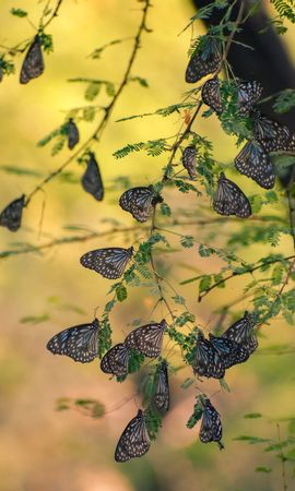 124632 Screensavers and Wallpapers Insects for phone. Download Macro, Butterflies, Branches, Leaves, Insects pictures for free