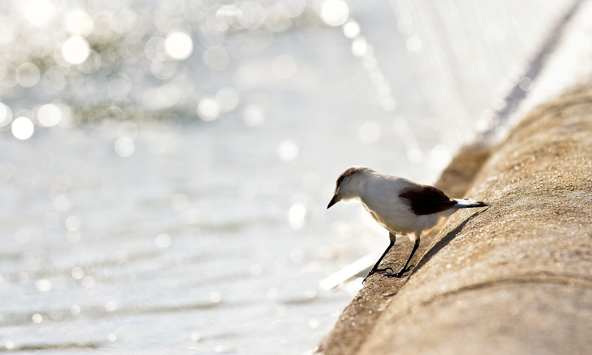 114771 download wallpaper Animals, Bird, Gull, Seagull, Shore, Bank, Shine, Light screensavers and pictures for free