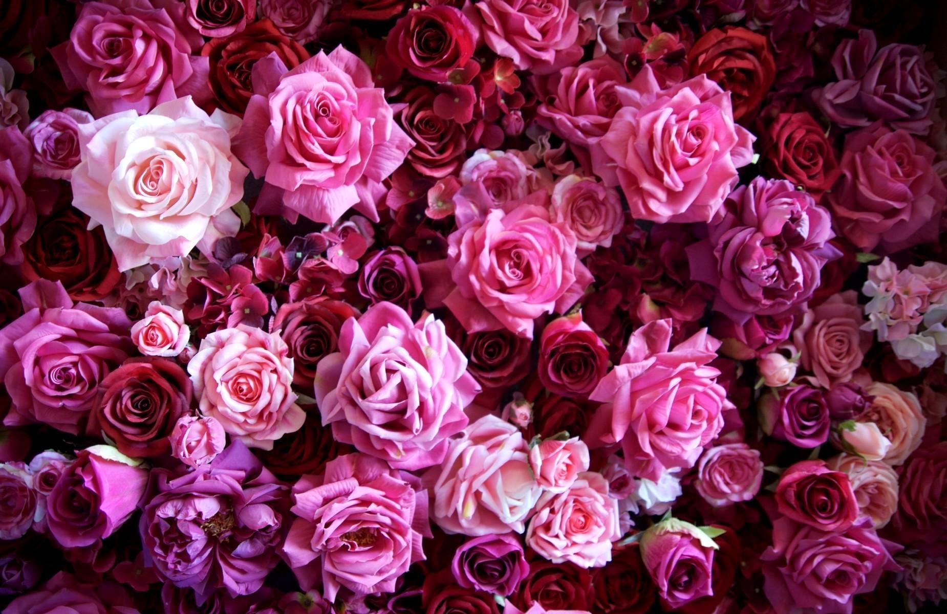 62869 Заставки и Обои Розы на телефон. Скачать Цветы, Розы, Букет, Бутоны, Много картинки бесплатно