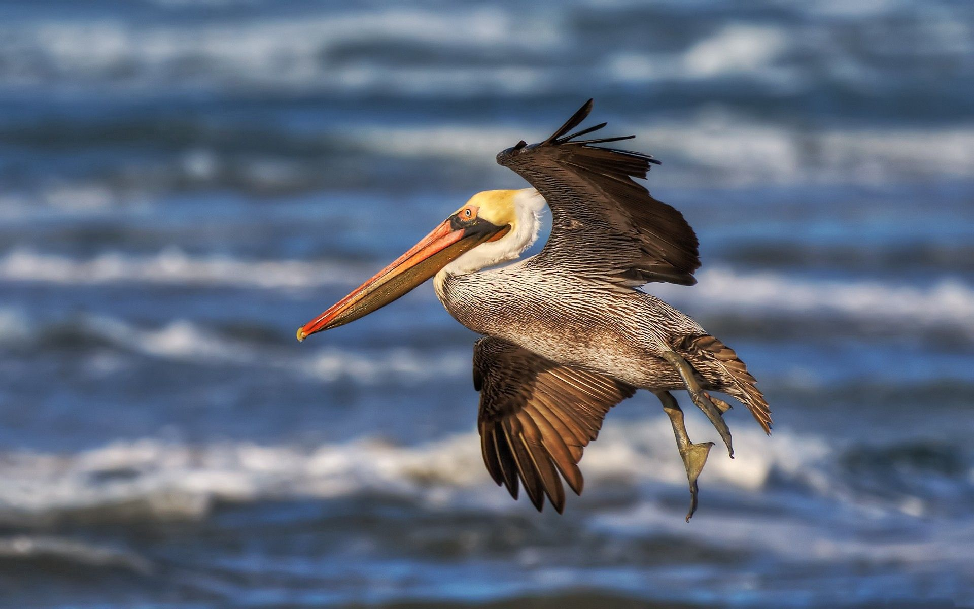 54849 download wallpaper Animals, Pelican, Flight, Beak, Waves screensavers and pictures for free