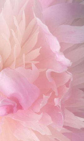 293 скачать обои Растения, Цветы - заставки и картинки бесплатно