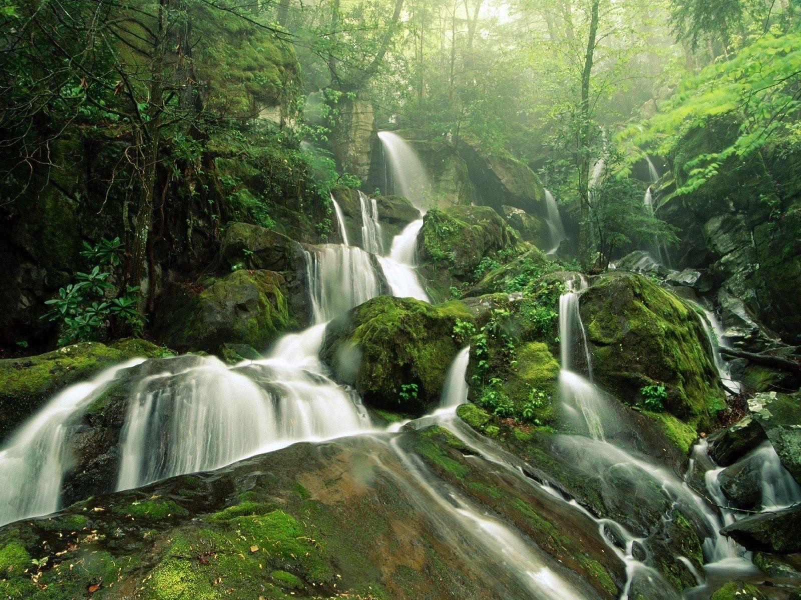 113011 économiseurs d'écran et fonds d'écran Cascades sur votre téléphone. Téléchargez Nature, Noyaux, Cascades, Cascade, Couler, Mousse, Ruisseau images gratuitement