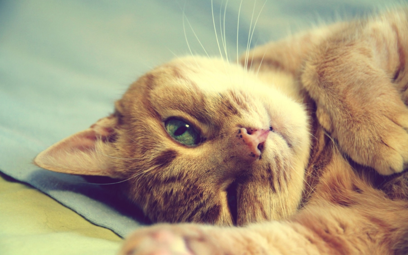 50245 download wallpaper Animals, Cats screensavers and pictures for free
