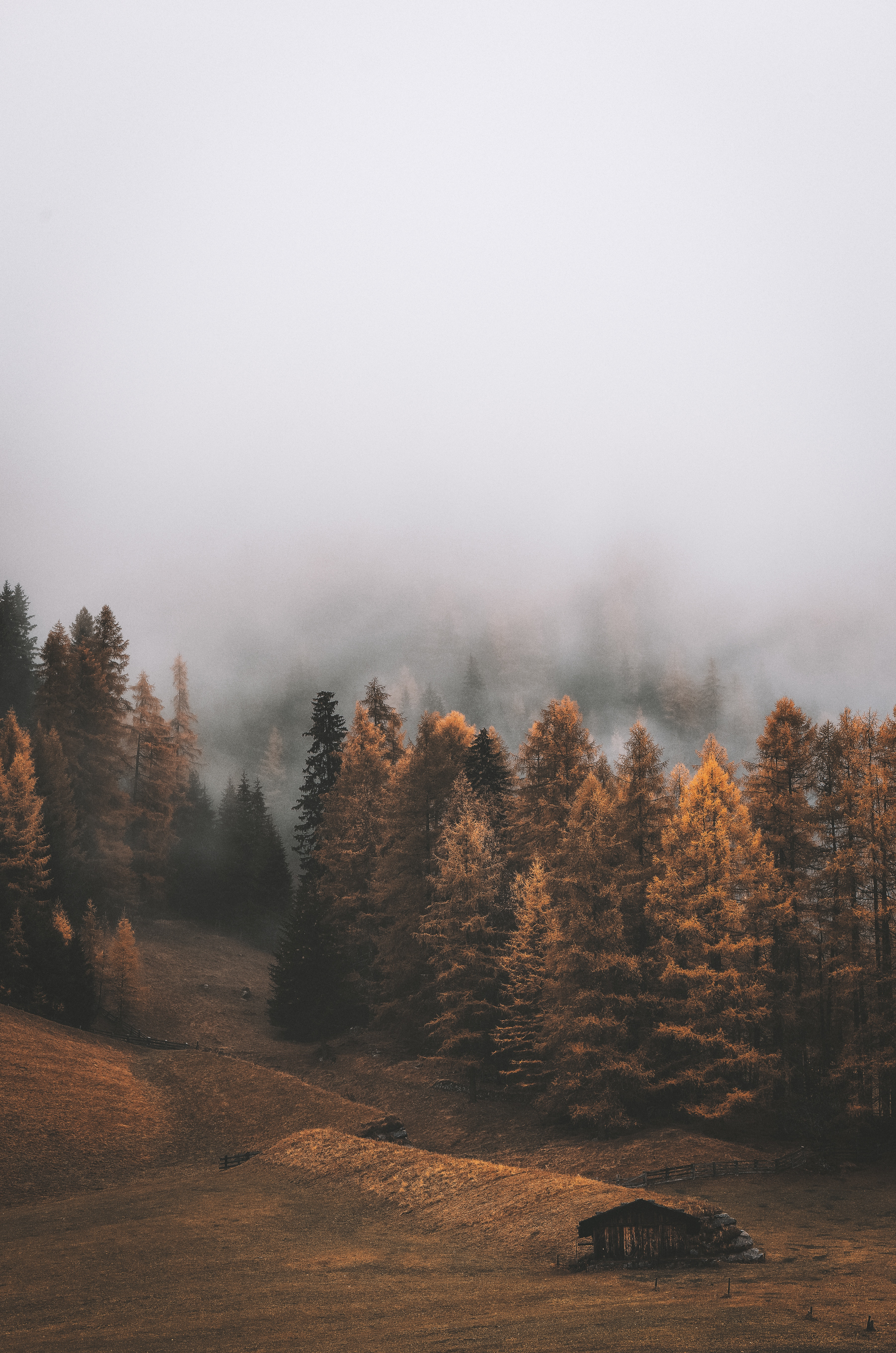 58744 download wallpaper Nature, Forest, Fog, Trees, Autumn, Landscape screensavers and pictures for free