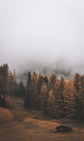 58744 скачать обои Природа, Лес, Туман, Деревья, Осень, Пейзаж - заставки и картинки бесплатно