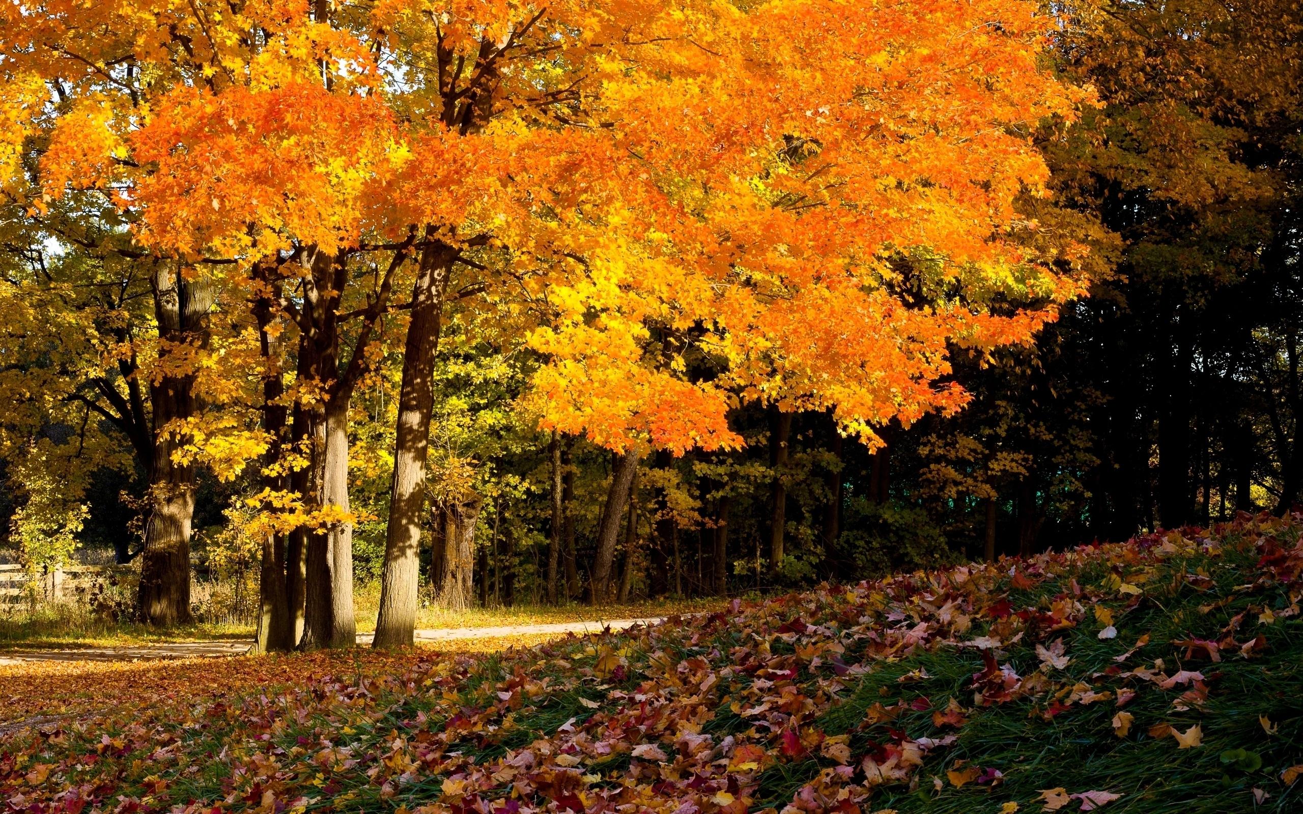 24102 скачать обои Пейзаж, Деревья, Осень - заставки и картинки бесплатно