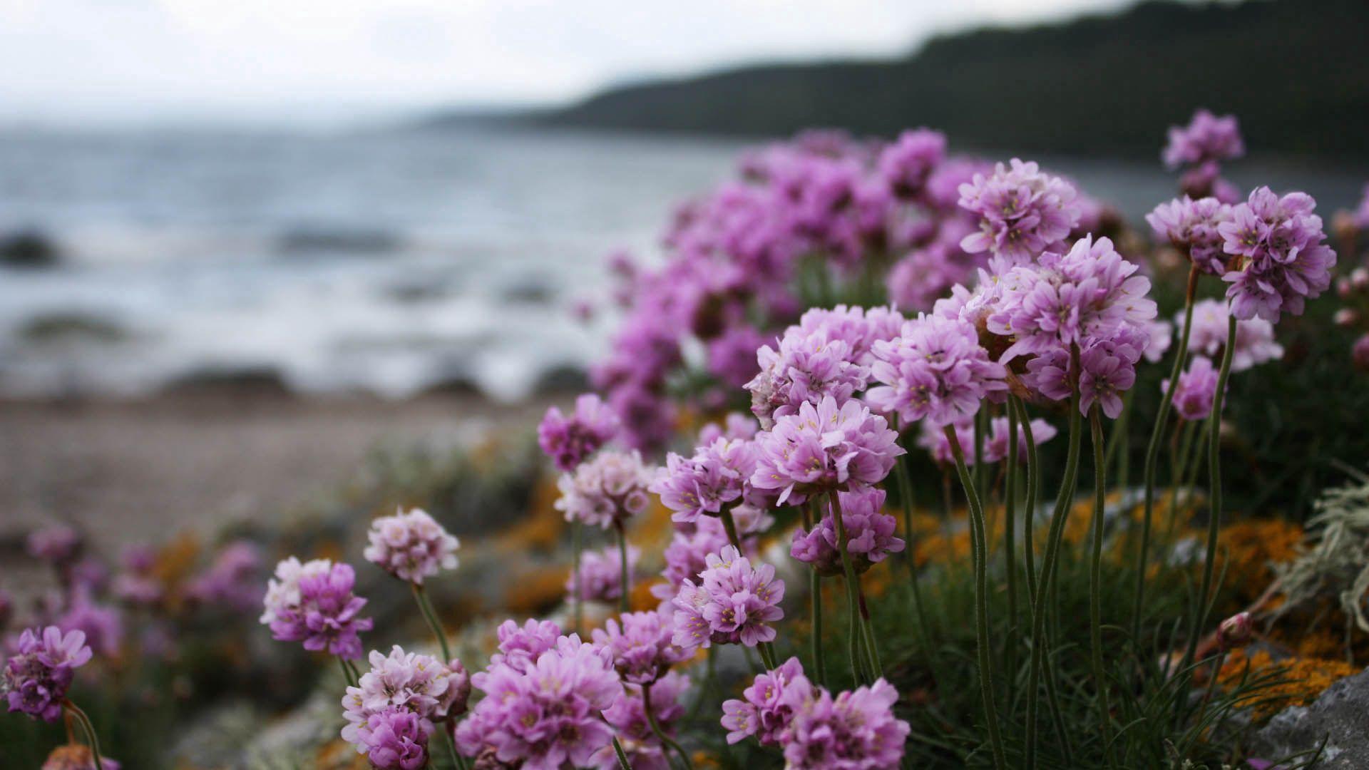 66481 скачать обои Цветы, Трава, Макро, Цветение - заставки и картинки бесплатно