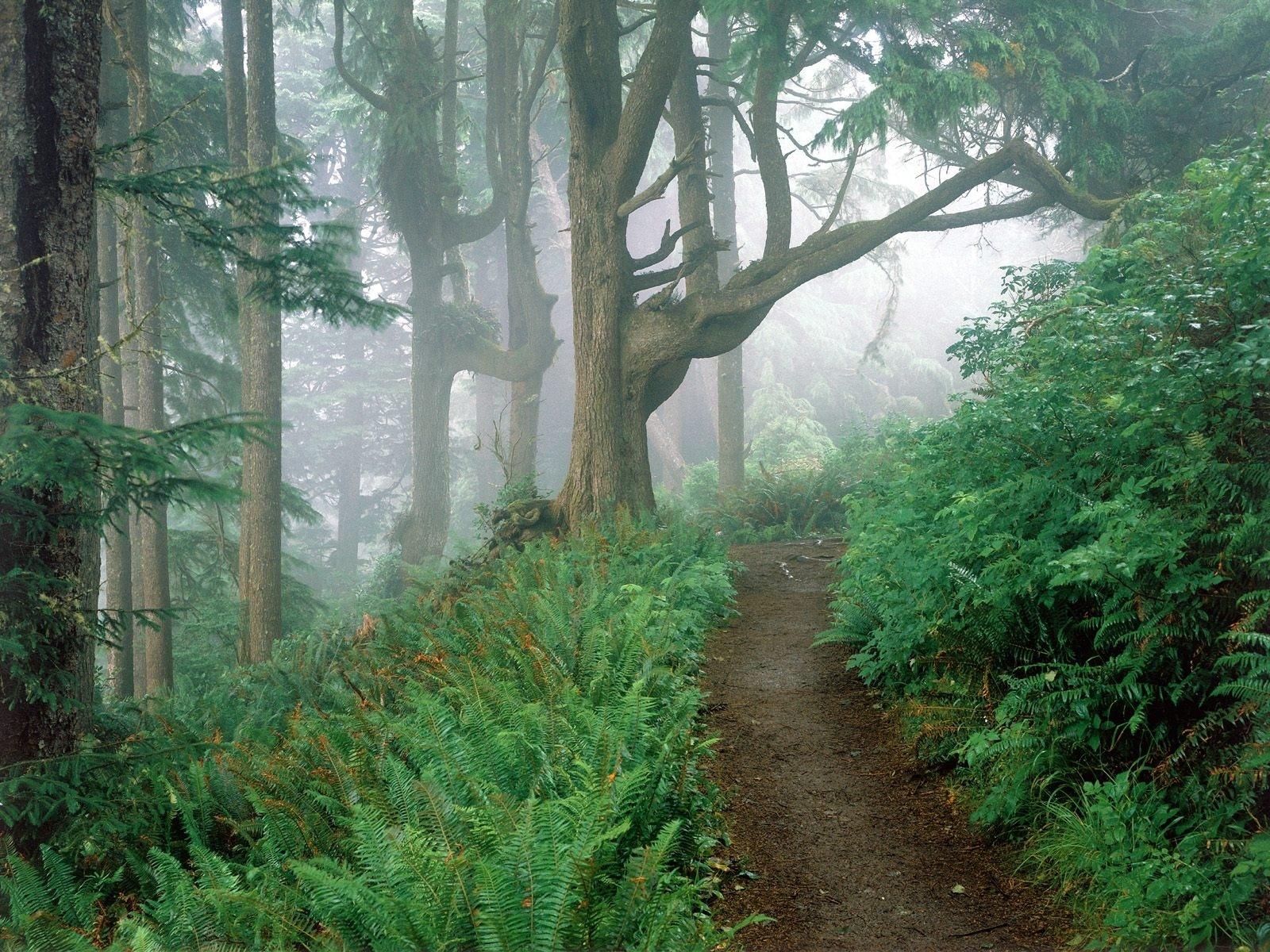 10586 скачать обои Растения, Пейзаж, Деревья, Дороги - заставки и картинки бесплатно