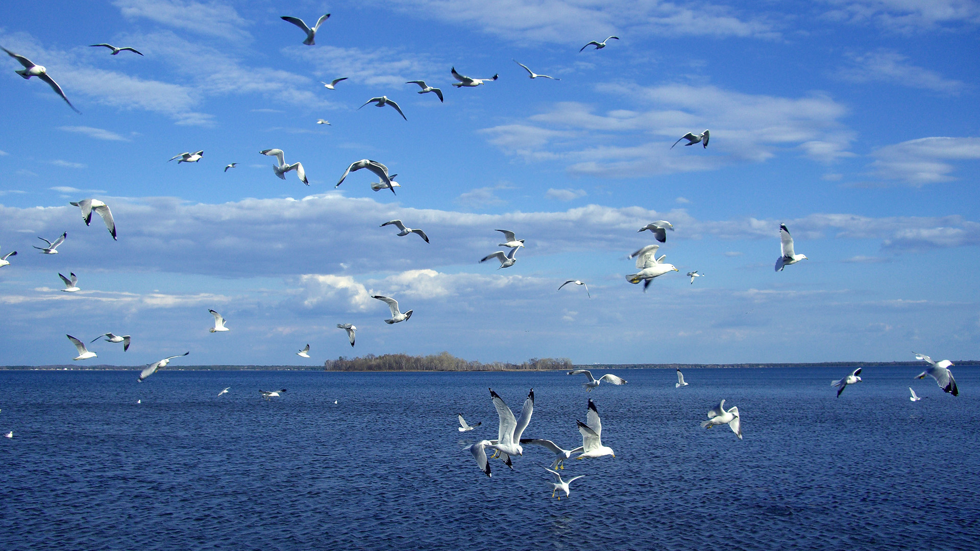 40733 download wallpaper Animals, Birds, Seagulls screensavers and pictures for free