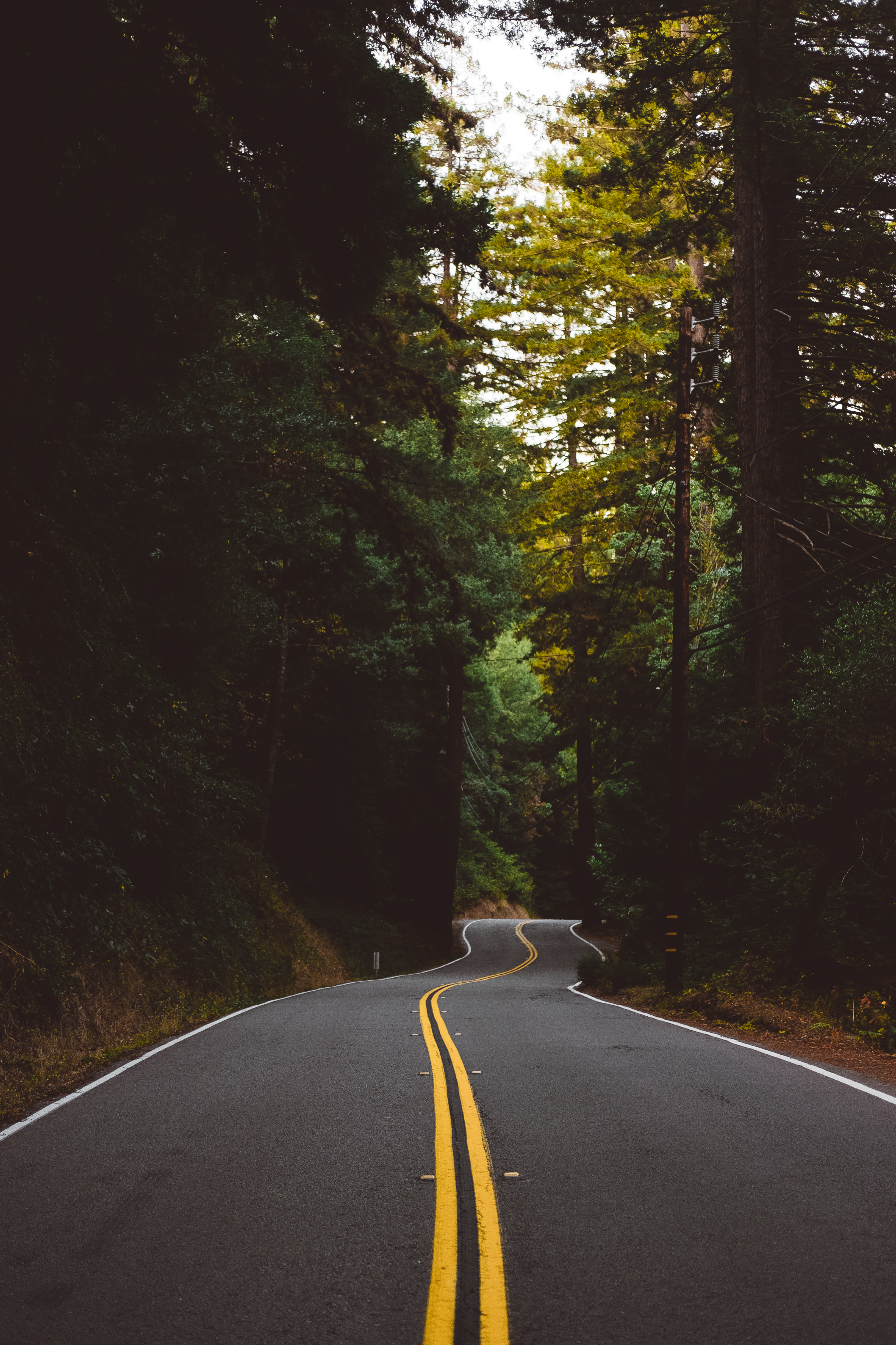 153618 Screensavers and Wallpapers Road for phone. Download Road, Nature, Trees, Turn, Markup, Forest pictures for free