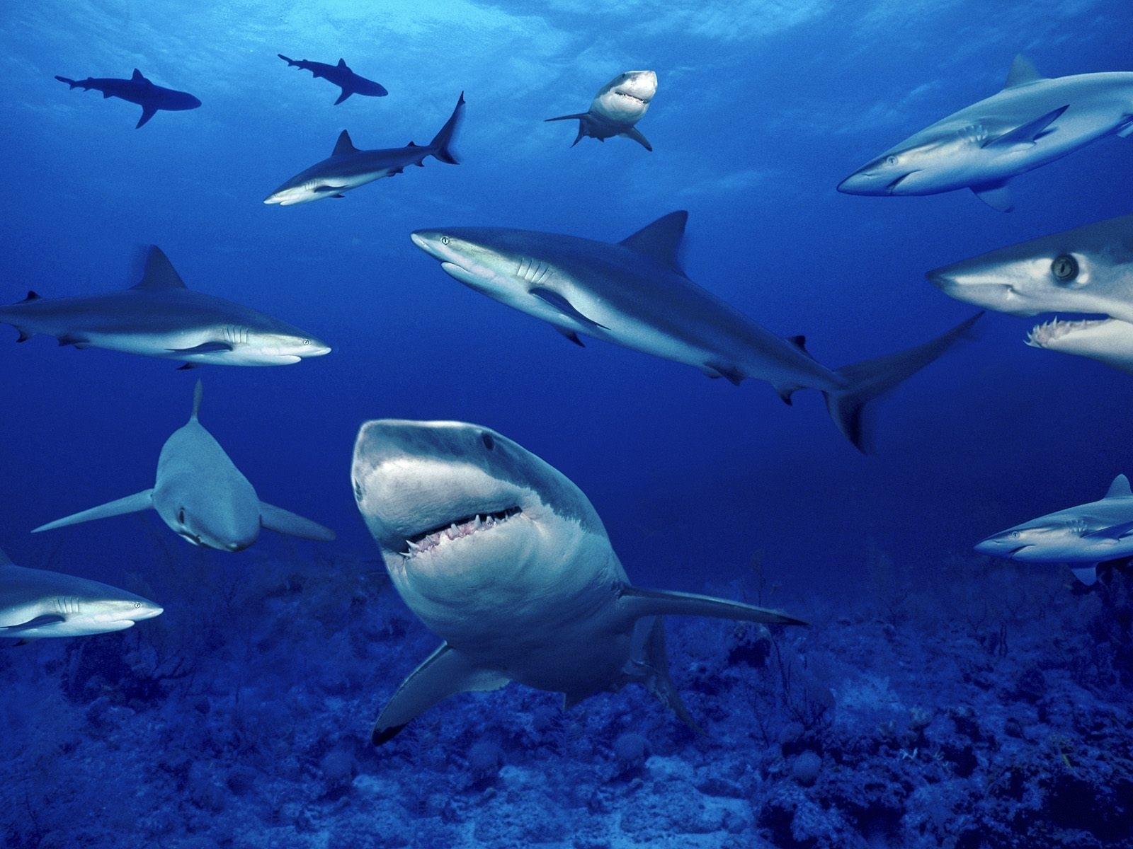 6786 Заставки и Обои Рыбы на телефон. Скачать Акулы, Рыбы, Животные, Вода картинки бесплатно