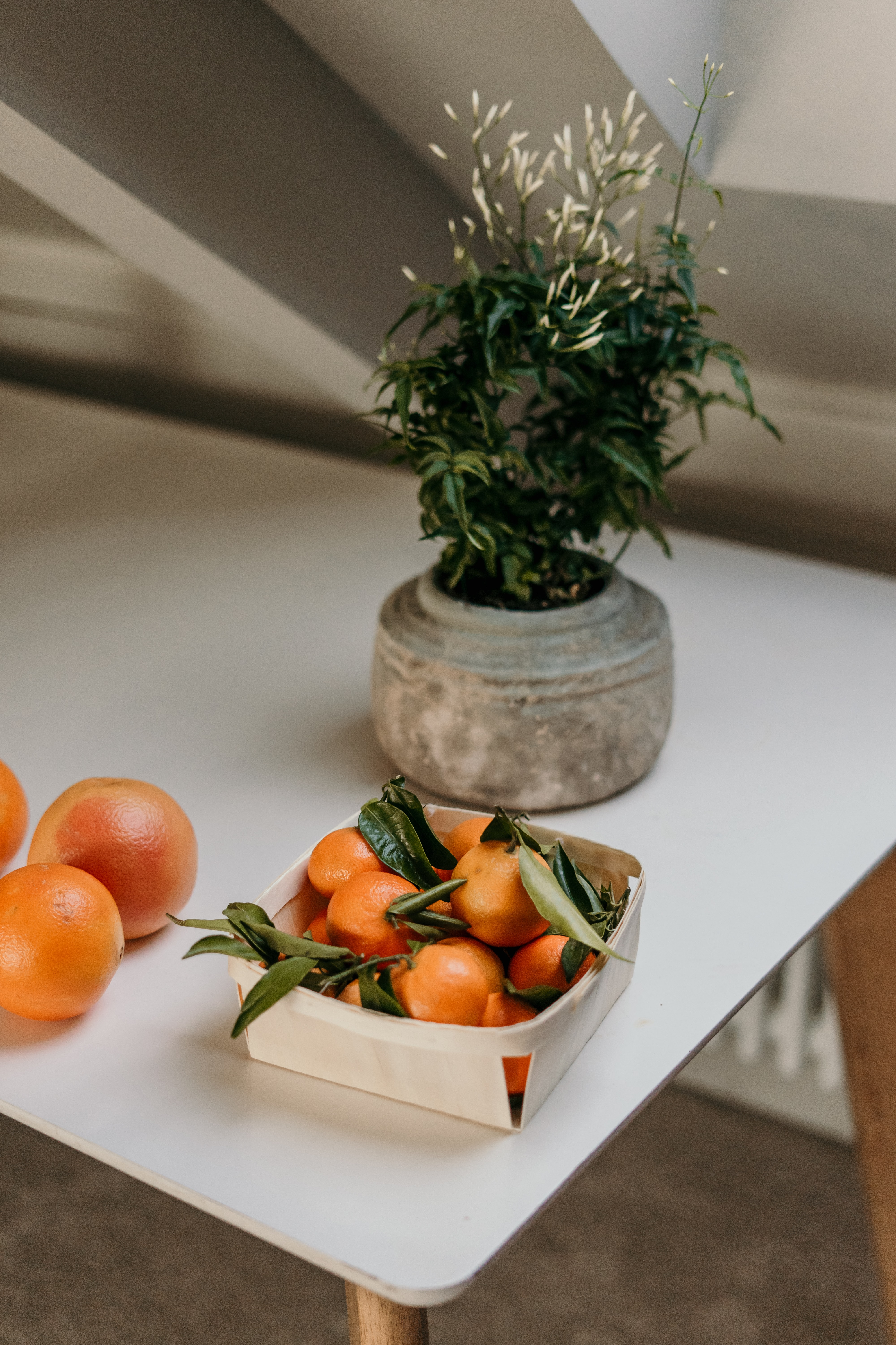 93457 download wallpaper Food, Citrus, Box, Flower, Fruits, Tangerines screensavers and pictures for free