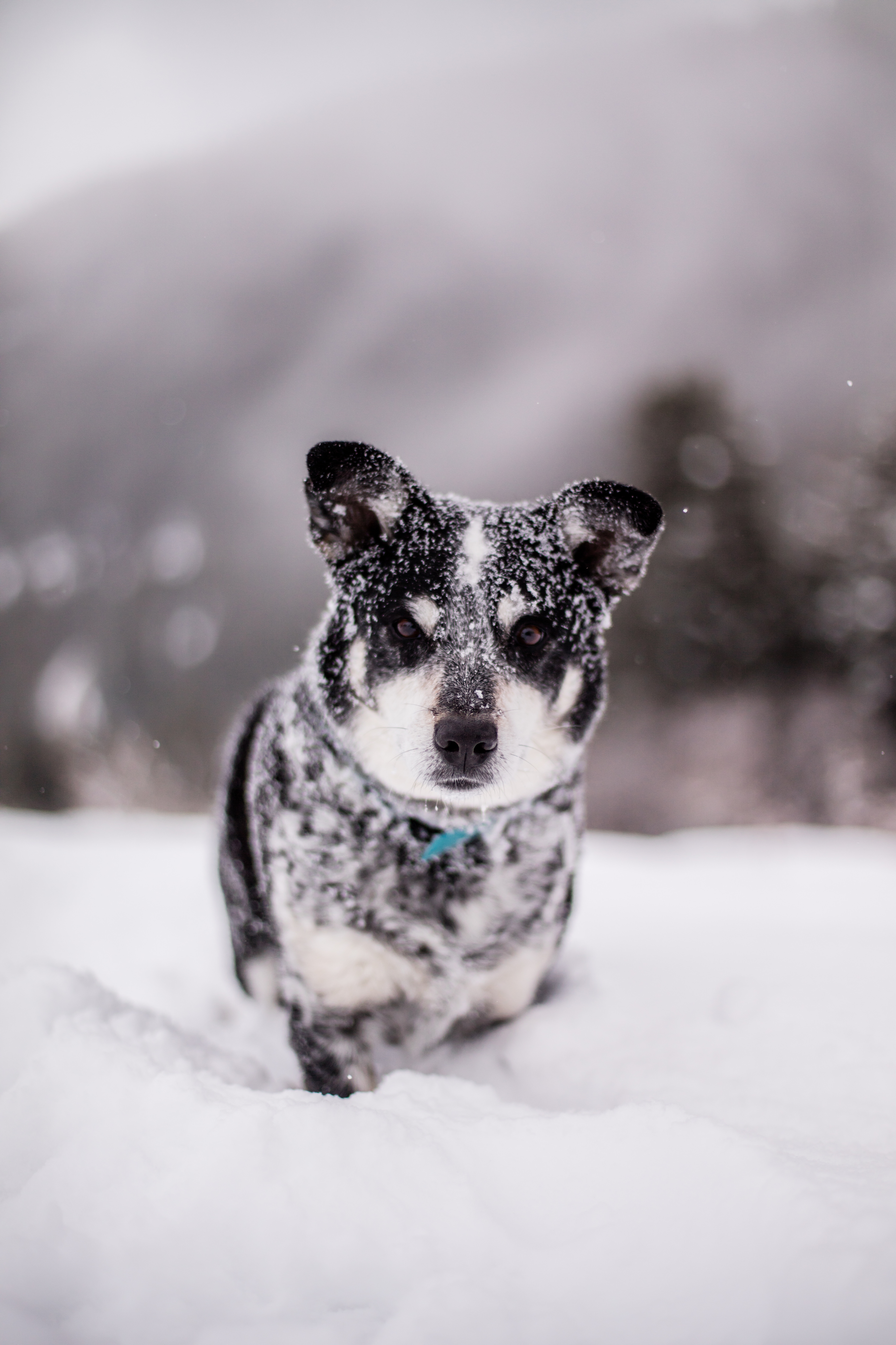 52565 download wallpaper Animals, Dog, Snow, Wet, Muzzle, Funny, Snowdrift screensavers and pictures for free