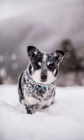 52565 Screensavers and Wallpapers Funny for phone. Download Animals, Dog, Snow, Wet, Muzzle, Funny, Snowdrift pictures for free