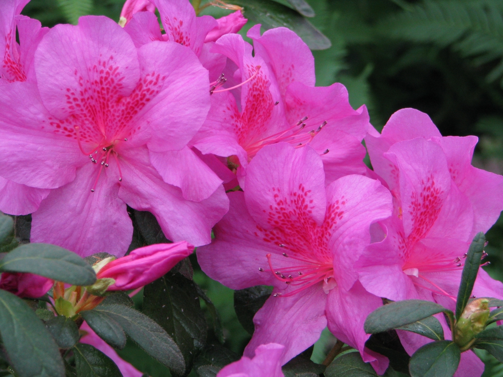 4924 скачать обои Растения, Цветы - заставки и картинки бесплатно