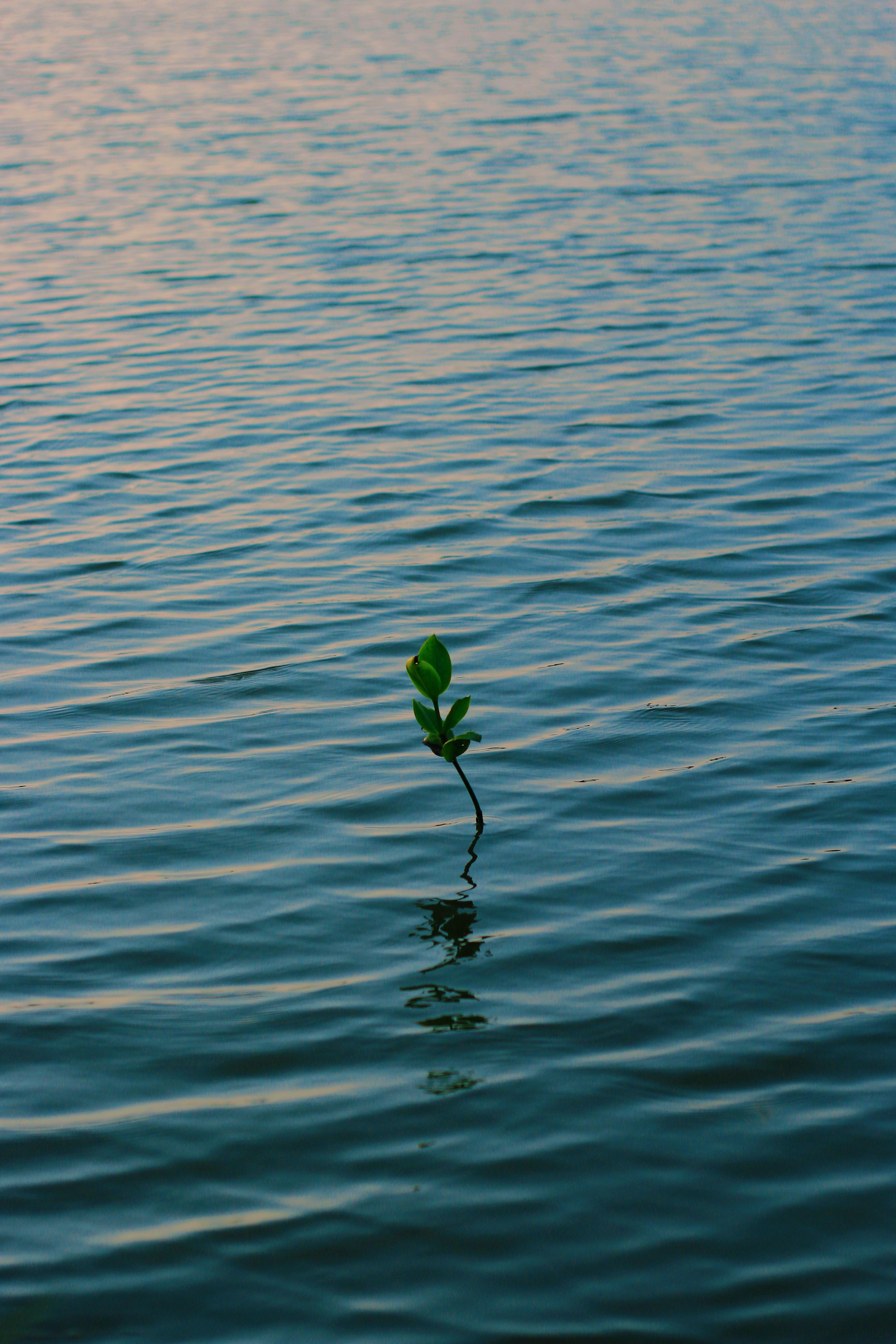136949 Заставки и Обои Волны на телефон. Скачать Природа, Ветка, Вода, Растение, Волны картинки бесплатно