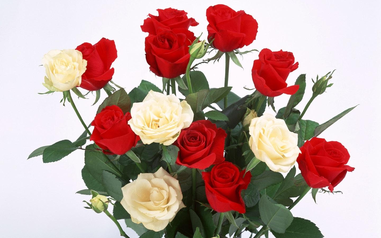 9025 Hintergrundbild herunterladen Pflanzen, Blumen, Roses, Postkarten, 8. März Internationaler Frauentag - Bildschirmschoner und Bilder kostenlos