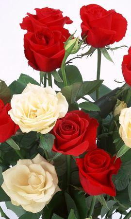 9025 скачать обои Растения, Цветы, Розы, Открытки, 8 Марта - заставки и картинки бесплатно
