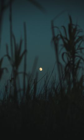 72595 download wallpaper Dark, Night, Moon, Dusk, Twilight, Grass, Plants, Outlines screensavers and pictures for free