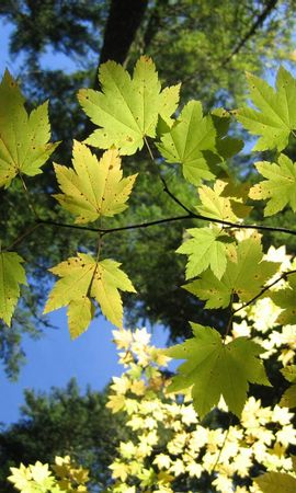 14552 скачать обои Растения, Деревья, Листья - заставки и картинки бесплатно