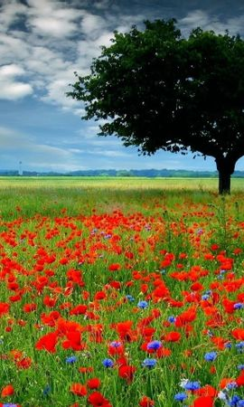 47507 descargar fondo de pantalla Plantas, Paisaje, Naturaleza, Flores, Árboles, Los Campos: protectores de pantalla e imágenes gratis