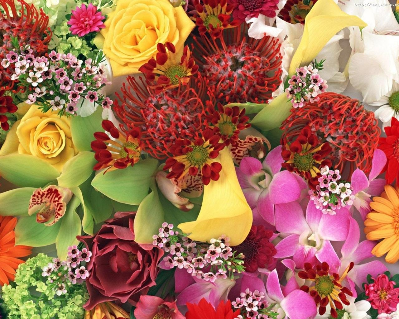 Скачать картинку Цветы, Праздники, Растения в телефон бесплатно.