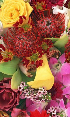 1390 descargar fondo de pantalla Vacaciones, Plantas, Flores: protectores de pantalla e imágenes gratis