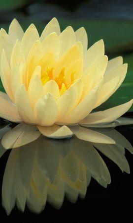 5923 скачать обои Растения, Цветы, Лилии - заставки и картинки бесплатно