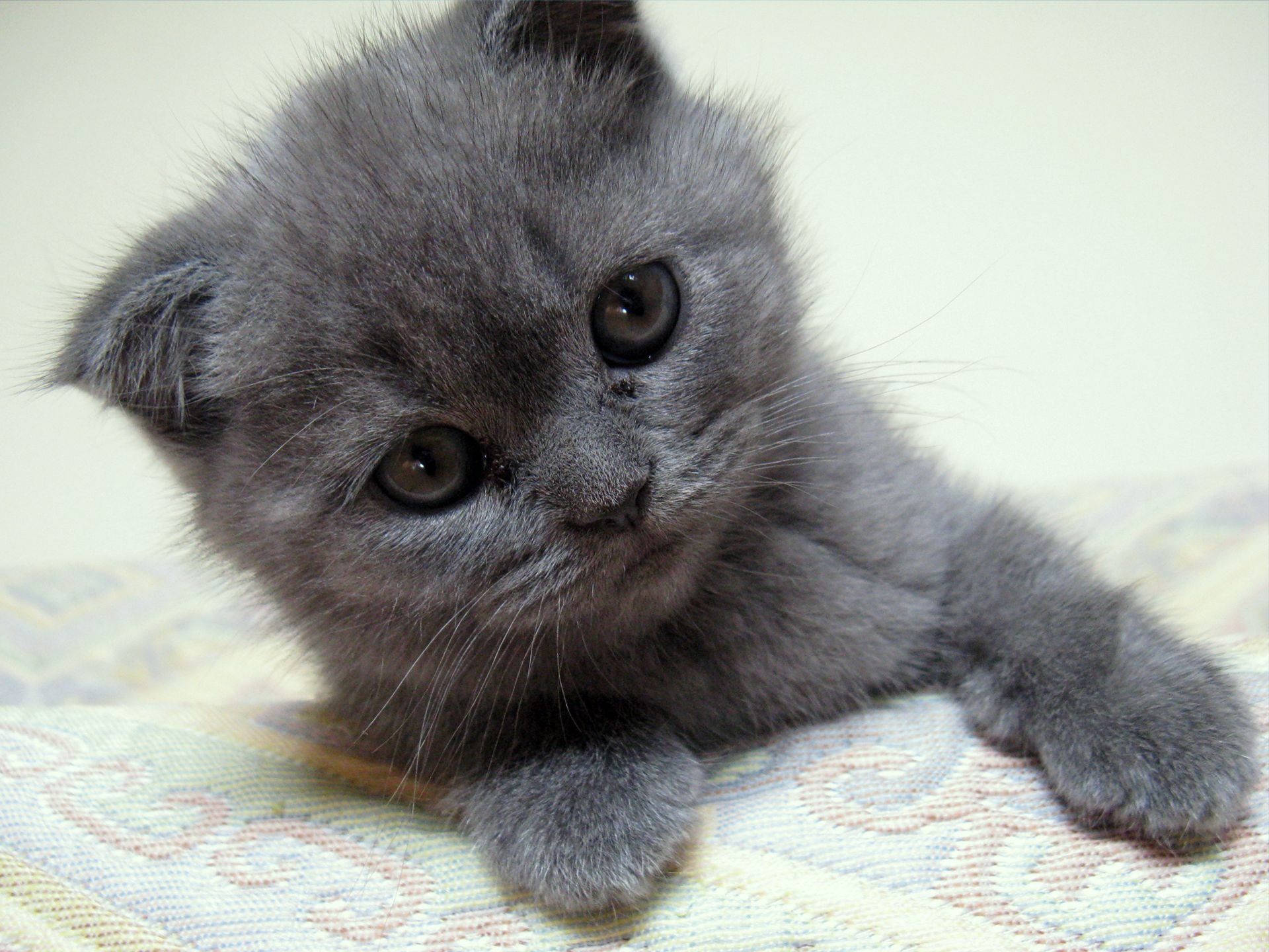 105355 download wallpaper Animals, Kitty, Kitten, Muzzle, To Lie Down, Lie, Nice, Sweetheart screensavers and pictures for free