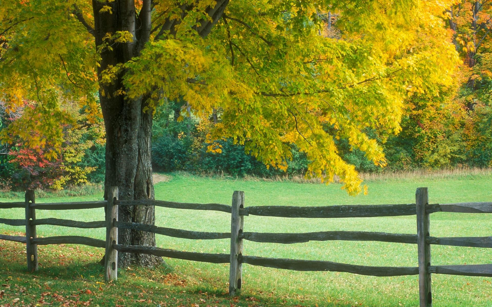 5043 скачать обои Пейзаж, Деревья, Осень - заставки и картинки бесплатно