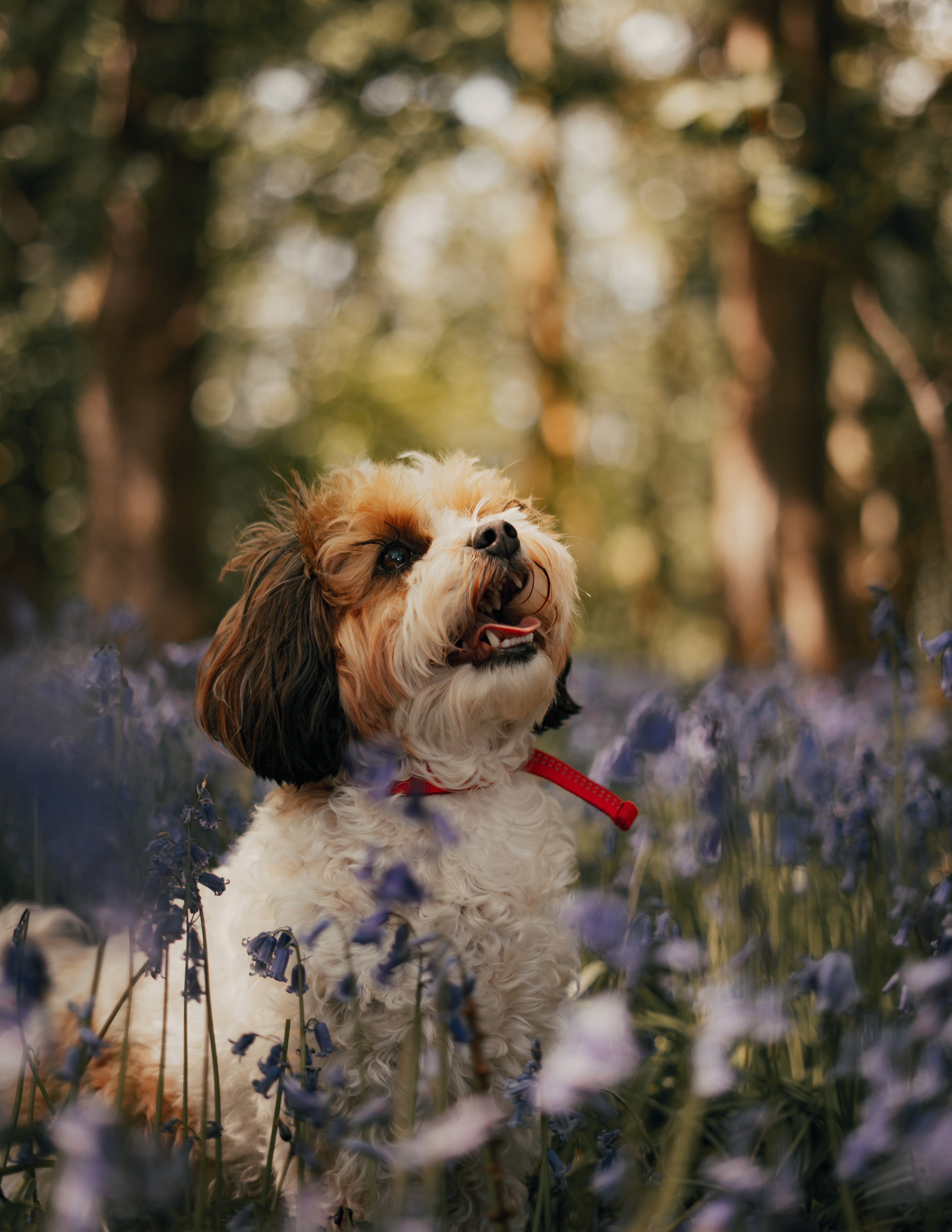 103771 download wallpaper Animals, Kawachon, Kawashon, Dog, Puppy, Flowers screensavers and pictures for free